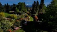 Rhododendrons and Mt Rainier