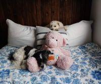 Bonnie, Bailey and Shnuggles