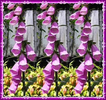 The Foxglove Fence.