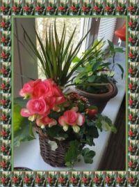 Svátek matek / Mother's Day