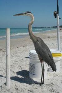 fisher of birds
