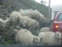 Roadblock in Snowdonia