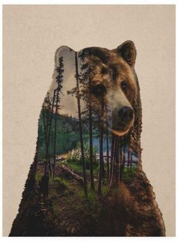 "Themes ""Forest Animals"" - a bear"
