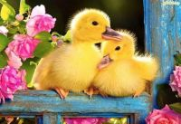 Cute little ducky's, know it's spring!