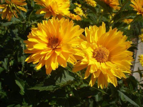 Ely flowers