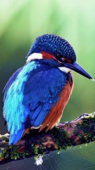 Pretty Bird - medium
