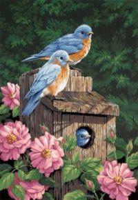 Birds and Bird House