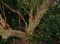 Royal Botanic Gardens2 - Melbourne