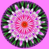 Floral Kal