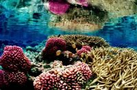 Colorful underwater landscape of a coral reef