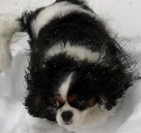 Joy enjoying the snow
