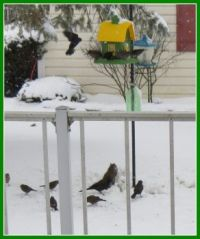 Busy bird feeders this week.
