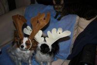 Funniest-Looking Reindeer Ever!