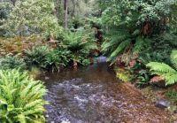 Russell Falls Creek: Mt Field National Park 9 June 2021
