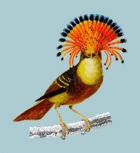 royal-flycatcher-onychorhynchus_53876-35016