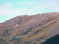 Alaska's berry slopes