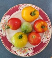 My Sister's Tomatoes