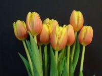 Tulips Portrait