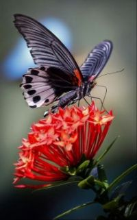 Butterfly feeding on a gorgeous flower.