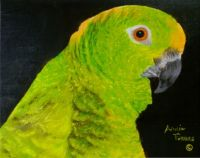 My Painting Of a Parrot