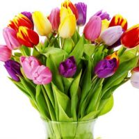 tulips_flowers_bouquet_bright_vase_white