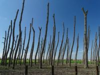 Bäume / trees in Zeeland NL
