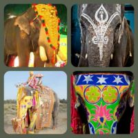 Painted Indian elephants