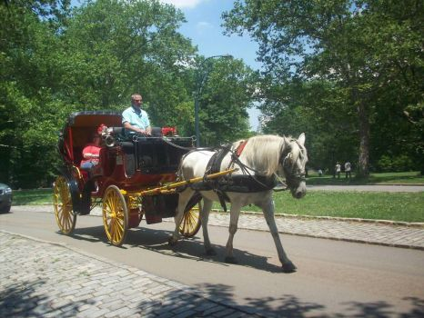Central Park Horse and Buggy