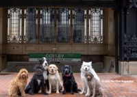 Boston Dogs 3