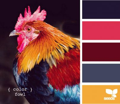 ColorFowl