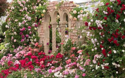 Rose covered archway