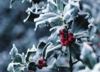 ♪♪The Holly.......♫