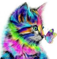 Rainbow Kitten with Butterfly