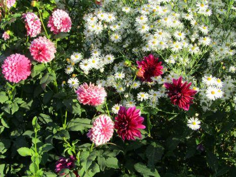 Fall flowers in Shelburn, Ma