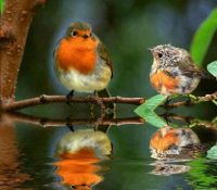 Birds and their reflections in lake