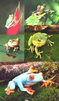 Theme, amphibians: frogs