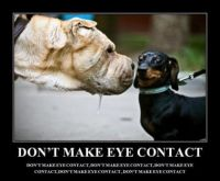 Don't make eye contact