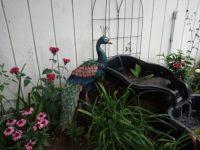 My garden... Summer project