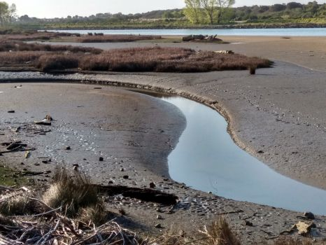 Whakatane River, Tide's Out