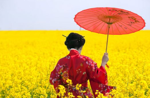 Geisha in Flowering Mustard Field