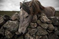Stone Wall Horse