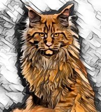 Maine Coon cat art 3