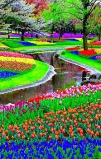 Tulip garden in the Nederland!