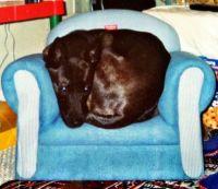 Stoli Comfy & Cozy