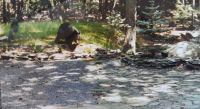 One of our many daily Bear visitors in PA. (30) yrs  ago