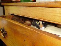 I spy ...