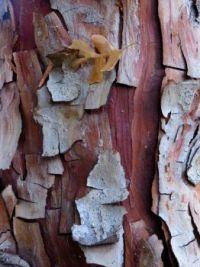 Textures - Cedar Bark