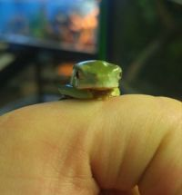 Tiny Frog is Judging You