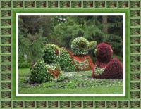 Kachny z květin - ostrov Mainau...  Ducks of flowers - Mainau Island ...