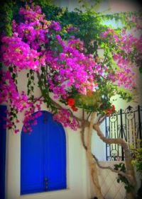 Santorini  Blue Windows